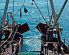A comparison of longline and trawl fishing practices and suggestions for encouraging the sustainable management of fisheries in the Barents Sea.