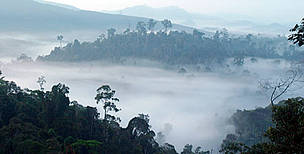 Dense forest landscape of the northeast tip of Borneo, in the Malaysian state of Sabah, the habitat of the endemic Bornean Pygmy elephant (<i>Elephas maximus borneensis</i>). Sabah, North Borneo, Malaysia.