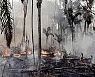 Although recent government figures in Brazil show a reduction in the rate of deforestation this year in the Amazon, burning rainforest to create pastureland for ranching and other agricultural activities continues. Amazon, Brazil.