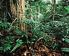 FSC-certified Amazonian rainforest managed by Precious Woods Amazon, Brazil.