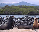 The &lt;I&gt;Galapagos Sustainable Energy Initiative&lt;/I&gt; will help protect the Galapagos Islands from pollution and other threats for generations to come.