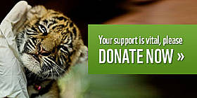 Your support is vital, please donate now / &copy;: WWF-Canon / James Morgan