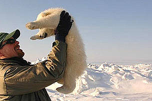 WWF International Arctic Programme Polar Bear Conservation Coordinator Geoff York with a polar bear cub