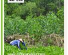 Forexco plantation in Quangnam, Vietnam