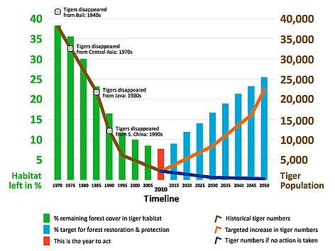 Tiger Population Graph