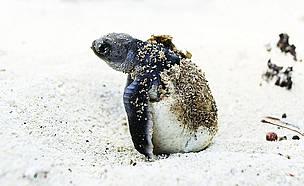 / ©: WWF-Canon / Roger Hooper