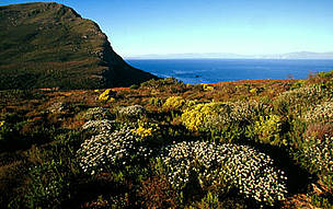 Mountain fynbos endemic vegetation of the Cape floral kingdom Cape Peninsula National Park, Western ... / ©: WWF-Canon / Martin HARVEY