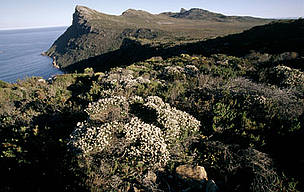 "Cape Peninsula National Park Table Mountain with endemic ""fynbos"" vegetation. Typical of ... / ©: WWF-Canon / Martin HARVEY"