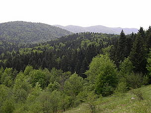 Mediterranean mixed forests in Sjeverni Velebit National Park, Croatia. / &copy;: WWF-Canon / Grald HIBON