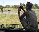 Observing and documenting elephants is key in understanding their behaviour  and how humans affect it.