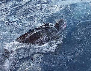 Gur, first male Leatherback turtle. / &copy;: Marin Abreu / PNOFA