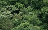 Tropical forest canopy, Amazonian rainforest, Guyana.