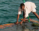 16-year-old Hamidu Kimbao working on his fish farm, Mafia Island Marine Park, Tanzania.