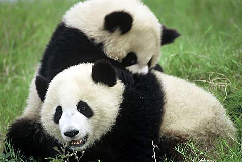 / ©: WWF-Canon