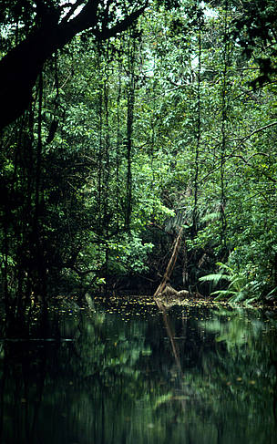 River in the tropical rainforest of the Ujung Kulon National Park. Java, Indonesia / &copy;: Alain Compost / WWF-Canon