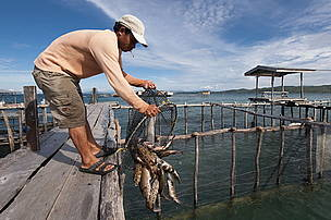 Live reef fish trade of groupers or coral trout. Tampakan, Kudat, Sabah, Malaysia. 26 June 2009