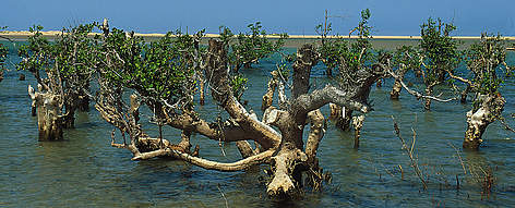 the importance of preserving coral reef and mangrove communities Management of mangrove communities:  preserving connectivity  stakeholders to reduce and eliminate major threats to coral reef communities that occur.