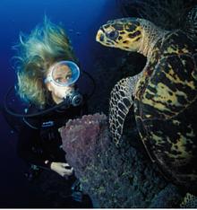 / ©: naturepl.com / Roberto Rinaldi / WWF=Canon