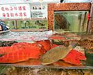 Live reef fish, including groupers, coral trout, snappers and cods with an assortment of crayfish, Lei Yue Mun, Hong Kong, 2009.