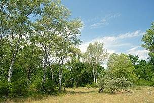 Hungarian steppe forest, site of a WWF LIFE project for the conservation of Euro-Siberian steppe woods and Pannonic sand steppes