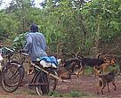 Wild meat hunter with dogs near Lugufu refugee camp, Tanzania