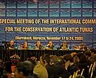 ICCAT, 2008: a decade long tradition of ignoring its scientists on catches and seasons continues, risking collapse of the world's last surviving large bluefin fishery.