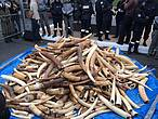 Destruction of three tonnes of ivory seized at customs by France © WWF-France / Denis Guignebourg