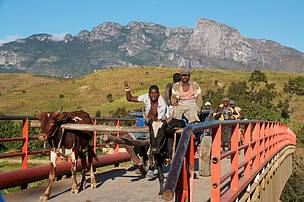 Zebu cart riding across the bridge in Ivohibe