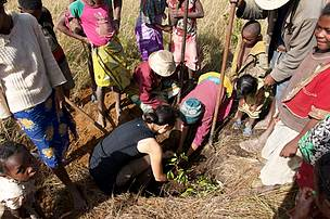 Reforestation: planting guava trees