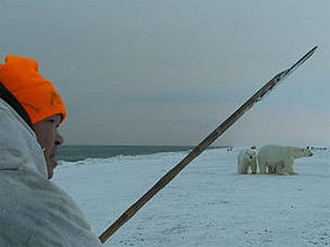 A member of the Umky Polar Bear Patrol warns off a polar bear using the traditional Chukchi method ... / ©: Tom Arnbom