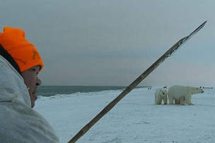 A member of the Umky Polar Bear Patrol warns off a polar bear using the traditional Chukchi method of waving a stick at the bear and if necessary giving the bear a tap on the head - as opposed to shooting it.