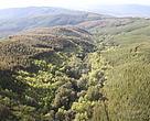 Sobrevuelo sector plantaciones y bosque nativo