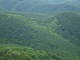 Csarna-valley, the largest intact forest in Hungary, from above.