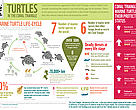 Marine turtles in the Coral Triangle: the essentials