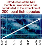 Introduction of the Nile Perch in Lake Victoria has contributed to the extinction of 200 local fish ... / ©: WWF