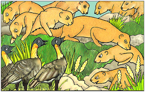 The Small Indian Mongoose was introduced to many islands such as Mauritius, Fiji and Hawai'i from ... rel=