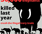 The ivory will be crushed at Rocky Mountain Arsenal National Wildlife Refuge in Denver, Colorado on November 14, 2013.