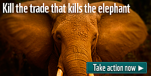 Join our campaign to end the illegal wildlife trade. We must kill the trade that kills elephants, rhinos and tigers.