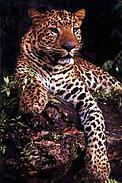 Jaguareté (Panthera Onca) en la Reserva del Mbaracayú / ©: Fundación Moisés Bertoni