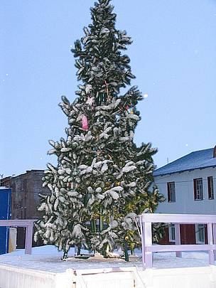 The Cape Schmidt Christmas tree.  / ©: Tom Arnbom