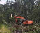 Natural forest clearing by APPs supplier in West Kalimantan, PT Daya Tani Kalbar. Location: S045'37.80&quot; E10948'52.21&quot;, 18 March 2013.