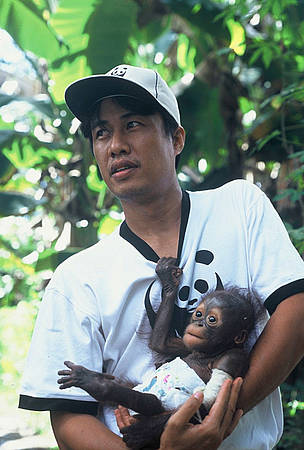  Syahir Syah of WWF-Kapuas Hulu holds Monyong, a baby orang-utan that was saved from the illegal ... / &copy;: WWF-Canon / Jikkie JONKMAN