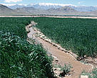 Land irrigated by the <I>karez</I> system, Afghanistan.