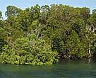 Mangroves in Kiunga Marine National Reserve, Kenya. A WWF-funded survey in the area in 1998 showed that most areas had viable mangrove forests that could support controlled extraction.&lt;BR&gt;