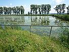 Ciocanesti fish farm / &copy;: WWF