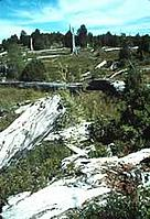 Alerce stumps in what was one a temperate rainforest Near Valdivia, Chile. / ©: WWF-Canon / Edward PARKER