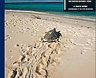 Turning the Tide: Exploitation, Trade and Management of Marine Turtles in the Lesser Antilles, Central America, Colombia and Venezuela