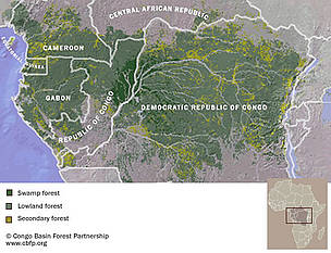  / &copy;: Congo Basin Forest Partnership