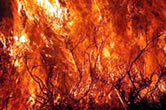 Fires are a major threat to forests throughout the Mediterranean. / &copy;: WWF-Canon / Michel GUNTHER