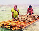 Transporting live rock on a &lt;I&gt;bilibili&lt;/I&gt; (bamboo raft).